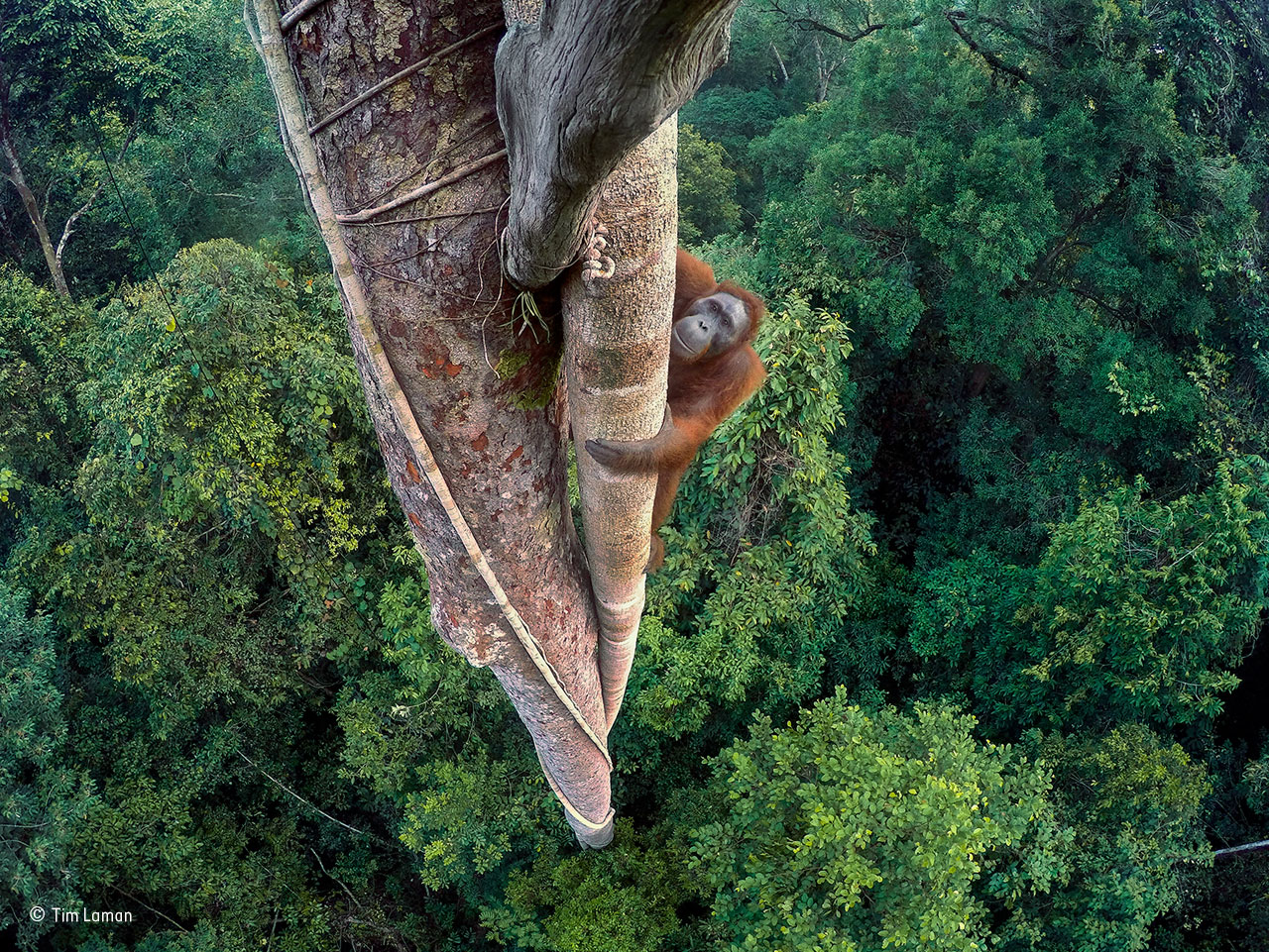 Ganador del gran premio Wildlife Photographer of the Year